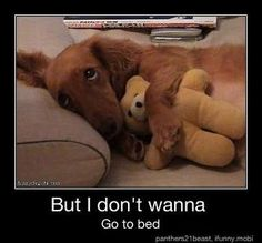 """But I don't wanna go to bed!"" If I ever get a dog, he will have to love bears."