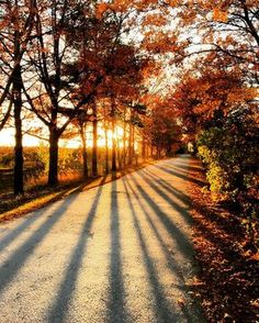 Another glorious late Autumn day with the light streaming through the trees . Late Autumn, Autumn Cozy, Autumn Fall, Winter, Fall Pictures, Pretty Pictures, Autumn Photos, Beautiful World, Beautiful Places