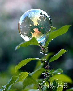 * Gazing Bubble...Tiny, but magnificent...Beauty is in the eye of the beholder. That God at 77 I can behold God's beauty...