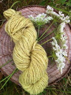 I got a nice pale yellow on my homespun wool with Queen Annes Lace. Also known as wild carrot, this grows wild all over the northwest. Credit goes to Jenny Dean and her book Wild Color.