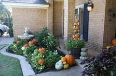 Love all the pumpkins and gourds nestled in the flower beds