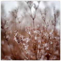 autumn swirl / 500px Dandelion, Autumn, Flowers, Plants, Fall Season, Dandelions, Fall, Plant, Taraxacum Officinale