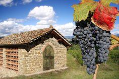 Stock image of 'Chianti vineyard landscape in Tuscany, Italy'