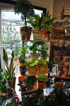 We Love Our Houseplants!