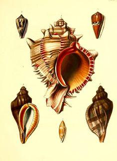 The zoology of Captain Beechey's voyage London,H.G. Bohn,1839. biodiversitylibrary.org/item/87193