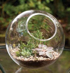 6480: Glass Terrarium (Product Detail)