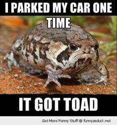 funny-grumpy-toad-frog-car-pun-joke-pics.jpg (400×428)