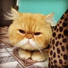 A grumpy old man