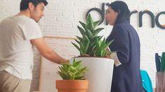 ¡Martesico! Damos la bienvenida a nuestros dos cactus(es), en lo que unos comentan un proyecto, alguien, no diremos nombre... se limita a hacer fotografías a las planticas. #asivaespaña #toñiesindependiente