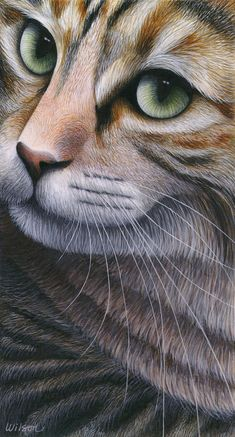 Calico Tabby Cat Painting - Cropped Cat 2 by Carol Wilson Animal Paintings, Animal Drawings, Kittens Cutest, Cats And Kittens, Domestic Cat, Cat Drawing, Cat Face, Gravure, Dog Art