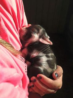 This is absolutely my dream pig!!! Tiny and spotted ❤