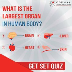 What is the largest organ in human body?  Test your knowledge by answering this simple question. Comment below!