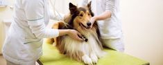 Mi perro no engorda: motivos y soluciones - Dog Pet Pet Dogs, Pets, Breeds Of Small Dogs, Cuddling, Mans Best Friend, Dogs, Animals And Pets, Doggies