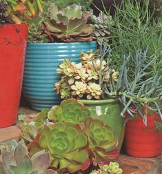For extra-hot outdoor conditions, extended vacations or people who just can't seem to keep a plant alive, succulents are a fantastic choice. Most survive quite well in full sun and require at least one to two hours per day of full sun.