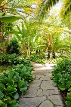 Tropical pathway / lighting / garden / foliage / tropical garden / outside / landscape