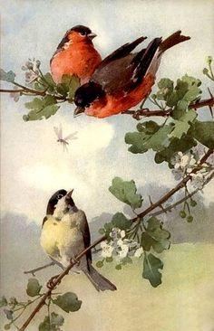 Em post anterior mencionei que os trabalhos de Catherine Klein incluíam, para além de outros temas, os pássaros. Aqui ficam algumas de...