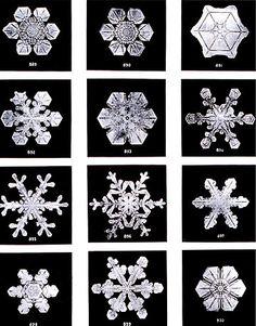 Fotografías de copos de nieve hechas por Wilson Bentley cerca de 1902