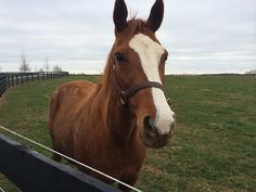 Looks like Rags to Riches has arrived back in the US and likely cleared quarantine.