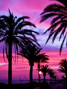 Palm Trees and Sunsets -Jimmy Floid in Cadiz, Spain Summer Wallpaper, Beach Wallpaper, Cute Wallpaper Backgrounds, Pretty Wallpapers, Paradise Wallpaper, Screen Wallpaper, Phone Wallpapers, Wallpaper Quotes, Beautiful Nature Wallpaper