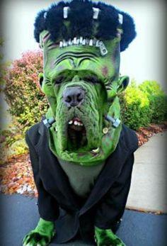 Lustige Halloween Kostüme für Hunde oder Katzen: Pupkenstein.