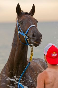 Black Caviar at the beach. Would love to see her at the 2012 Breeders' Cup!