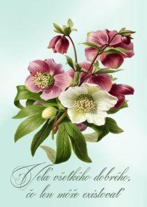 Congratulations, Place Cards, Place Card Holders, Plants, Blog, Flora, Plant
