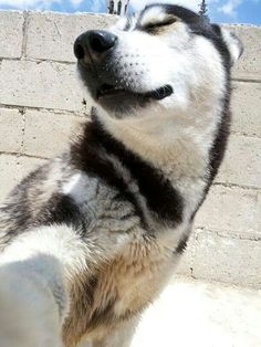 When Your Dog Is Smarter Than U Huskies Pinterest Dog - 29 adorable animals that will put a smile on your face