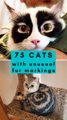 We found 75 cats with some of the craziest, unusual, and unique fur markings and patterns we've ever seen. From kitties with 'masks' to cats with hearts on their fur – each one is so gorgeous and one-of-a-kind! Which one is your favorite? #cats #cutecats