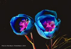 The MindsiMedia Blog : Flowers Noir, Original Photo Art Posters And Post Cards