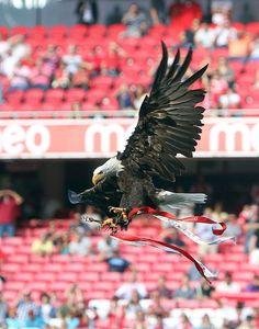 Benfica, eu sou de coração... Benfica, até de baixo de água...