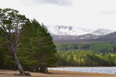DESPITE STRAIGHT LINES posted a photo:  Photograph taken at an altitude of Three hundred and thirty one metres at 09:16am on Sunday 17th May 2015 on the shoreline of Loch Morlich, nestled in the Glenmore Forest Park in Glenmore, Scotland.  Loch Morlich (Scottish Gaelic: Loch Mhùrlaig), is a freshwater loch in the Badenoch and Strathspey area of Highland, Scotland near Aviemore. The loch is home to a watersports center with kayaking, sailing and windsurfing among the activities available…