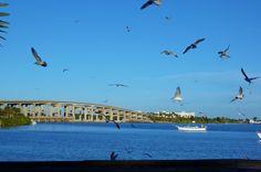 Merritt Island, Fla. Merritt Island, Sydney Harbour Bridge, Our Life, This Is Us, Florida, Building, Places, Photography, Travel