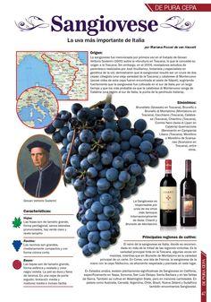 Vinos, gastronomía, destilados, coctelería, arte, cultura y más...