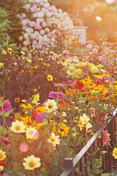 Farm Girl Studios: A Cutting Garden Maybe it is possible to mix many colors for a cutting garden without getting a horrid circus tent effect. Seems tricky, though.