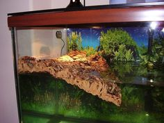 Turtle tank with nice basking area. Aquatic Turtle Habitat, Aquatic Turtle Tank, Turtle Aquarium, Aquatic Turtles, Happy Turtle, Big Turtle, Turtle Life, Turtle Tank Setup, Turtle Dock