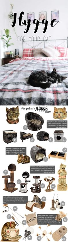 How to create hygge autumn for your cat - cat toys, cat gifts, cat beds, cat scratchers & other ideas Cityscape Bliss // cats & felines
