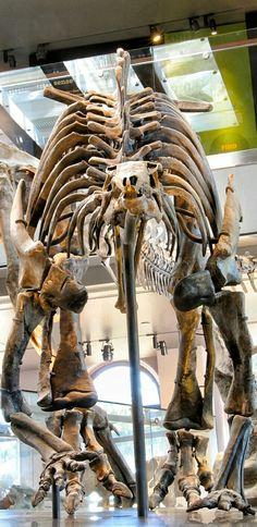 Camptosaurus  For more on dinosaurs go to www.thedinozone.com