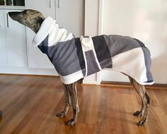 CozyGreys Greyhound Coats, Whippet Coats Melbourne Australia Whippets are good for both homes with yards and apartments. Beware, they think they are royal and you are the servant, but you'll never get more love. Pet Dogs, Dogs And Puppies, Corgi Puppies, Weiner Dogs, Grey Hound Dog, Dog Sweaters, Coat Patterns, Dog Coats, Dog Accessories