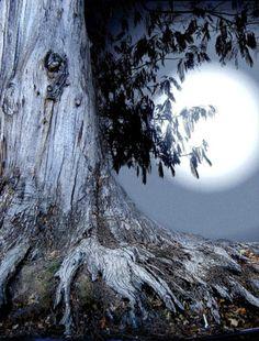 moonlight  ~ Ʀεƥɪииεð вƴ╭•⊰✿ © Ʀσxʌиʌ Ƭʌиʌ ✿⊱•╮