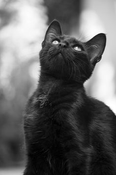 Photograph Black Little kitty portrait by Aleksandar Dimitrijevi? on - Enchanting photo of beautiful black cat (hva) I Love Cats, Crazy Cats, Cool Cats, White Cats, Black Cats, Black Kitty, My Bebe, Cat Photography, Stunning Photography