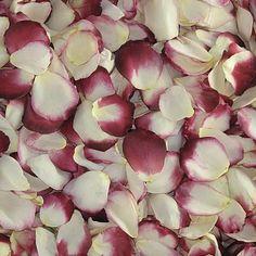 Blushing Bride Rose Petals (30 Cups) 1