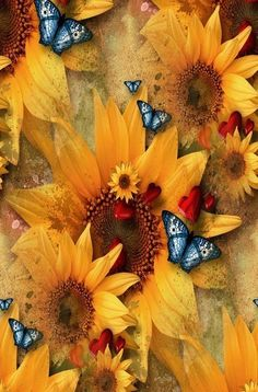 Summer...Sunflowers & Butterflies