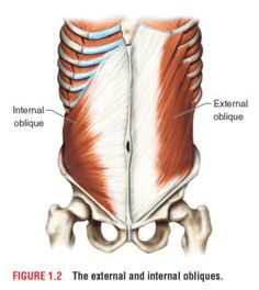"""Struggling to wrap your head around the different abdominal muscles? Read this excerpt! One additional comment to help remember which obliques are working in a rotation- the internal obliques are referred to as """"same side rotators."""" I.e. when rotating to your right your right internal oblique is working with your left external oblique to achieve this."""