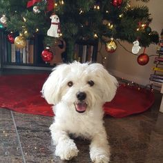 The tree is up! Mommy said there's a mini me on the tree - do you guys see it?…