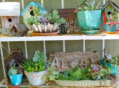 Succulents and bird houses