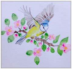 Blue tit on Apple blossom  By rachael dunn