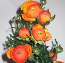 orange ranunculus - Google Search