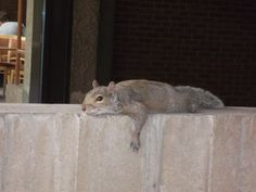 Even the squirrels know the semester is almost over!
