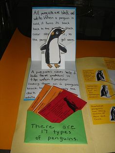 penguin lapbook - could modify to go along with The Emperor's Egg