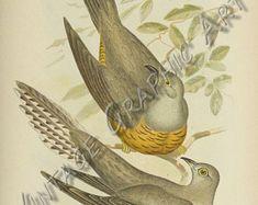 Bird of ptaki z Australii 1890 Brojnowski Digital Download | Etsy Art Vintage, Vintage Birds, Image Shows, Printable Wall Art, Teak, Wall Art Prints, Card Making, Clip Art, Australia